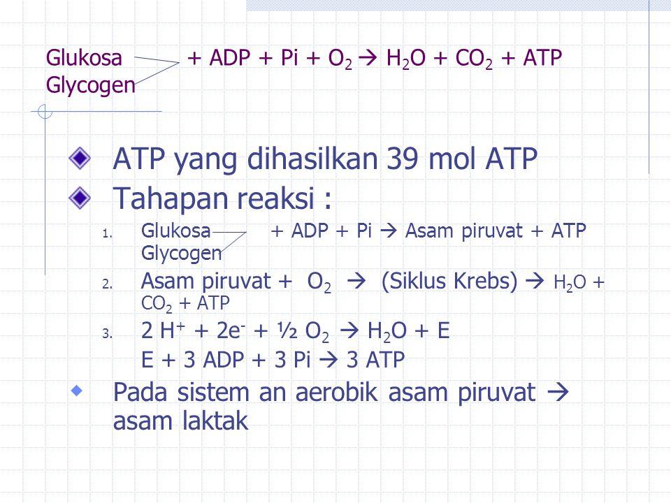 Glukosa + ADP + Pi + O 2  H 2 O + CO 2 + ATP Glycogen ATP yang dihasilkan 39 mol ATP Tahapan reaksi : 1.