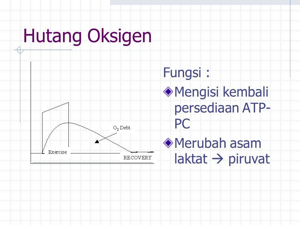Hutang Oksigen Fungsi : Mengisi kembali persediaan ATP- PC Merubah asam laktat  piruvat