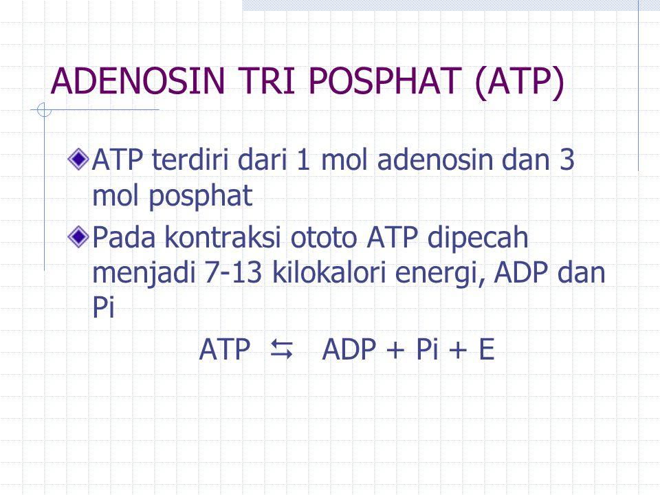 Sumber ATP 1.ATP PC (sistem fosfagen) 2. Glycolisis anaerobik (sistem asam laktat) 3.