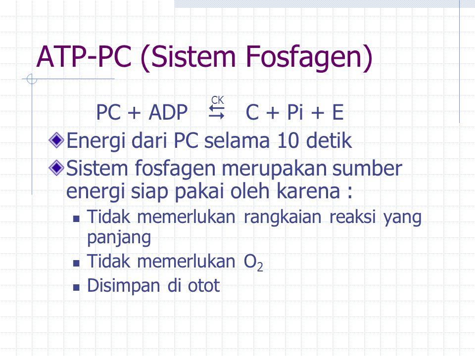 ATP-PC (Sistem Fosfagen) PC + ADP  C + Pi + E Energi dari PC selama 10 detik Sistem fosfagen merupakan sumber energi siap pakai oleh karena : Tidak memerlukan rangkaian reaksi yang panjang Tidak memerlukan O 2 Disimpan di otot CK