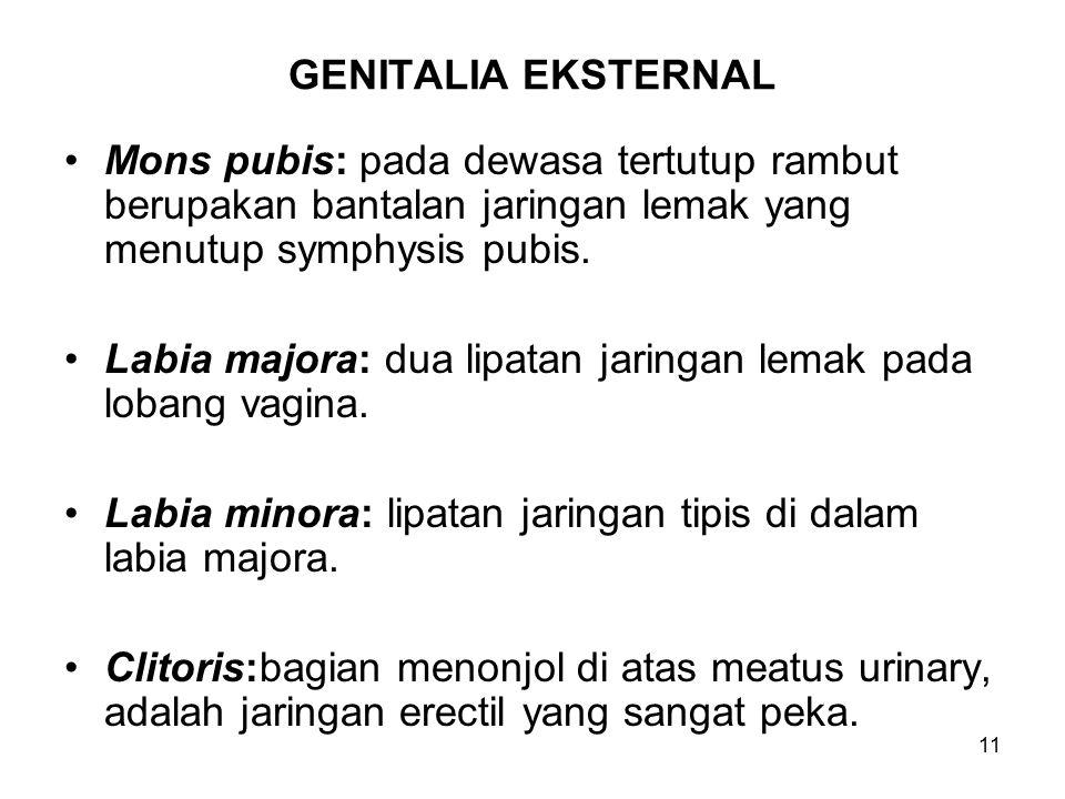 11 GENITALIA EKSTERNAL Mons pubis: pada dewasa tertutup rambut berupakan bantalan jaringan lemak yang menutup symphysis pubis. Labia majora: dua lipat