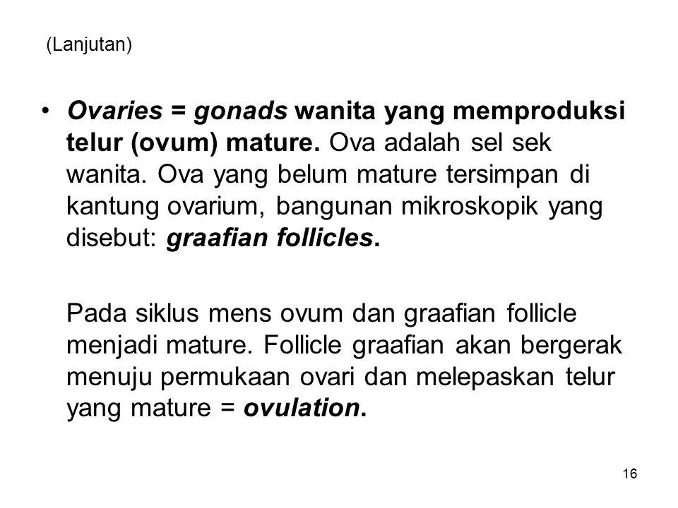 (Lanjutan) Ovaries = gonads wanita yang memproduksi telur (ovum) mature. Ova adalah sel sek wanita. Ova yang belum mature tersimpan di kantung ovarium