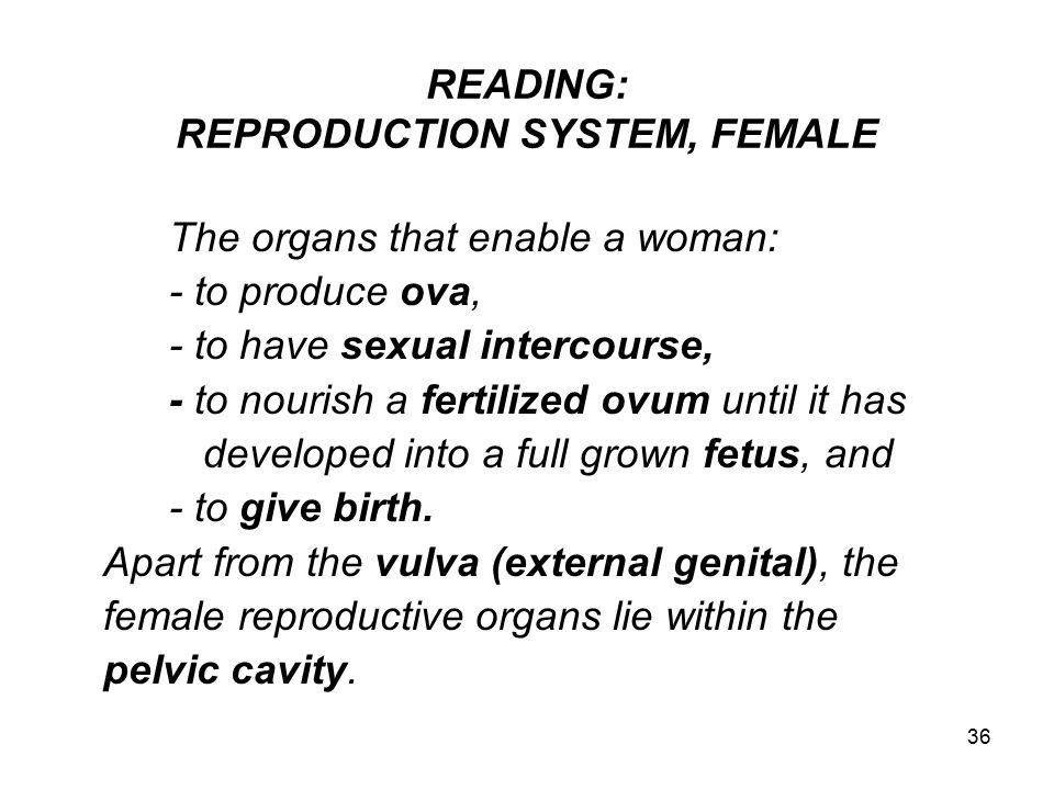 36 READING: REPRODUCTION SYSTEM, FEMALE The organs that enable a woman: - to produce ova, - to have sexual intercourse, - to nourish a fertilized ovum