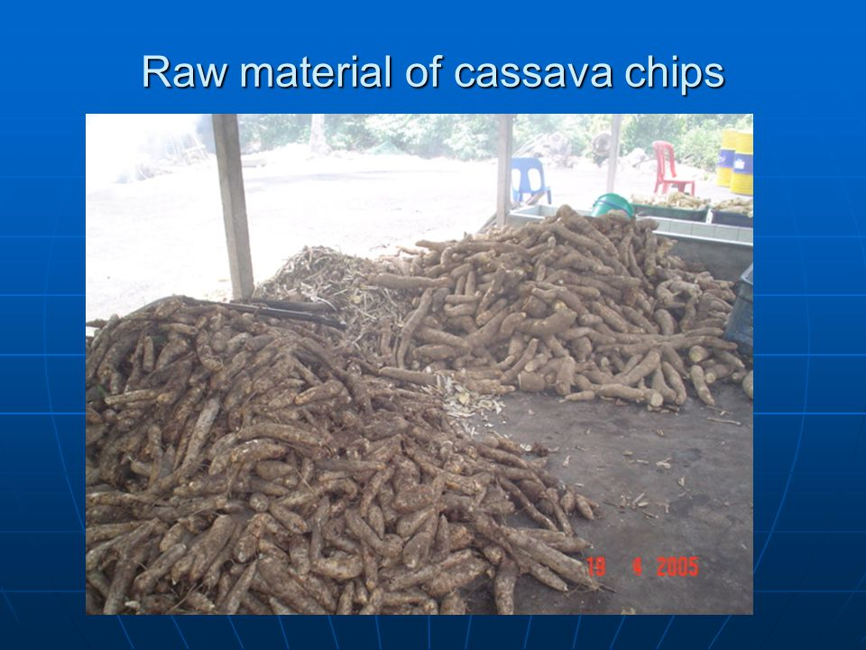 Raw material of cassava chips