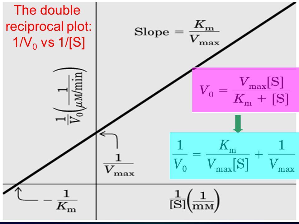 The double reciprocal plot: 1/V 0 vs 1/[S]