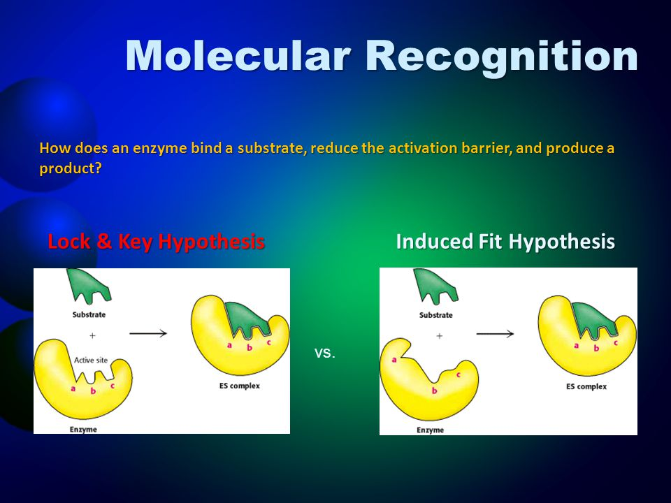 Molecular Recognition How does an enzyme bind a substrate, reduce the activation barrier, and produce a product? Lock & Key Hypothesis Induced Fit Hyp