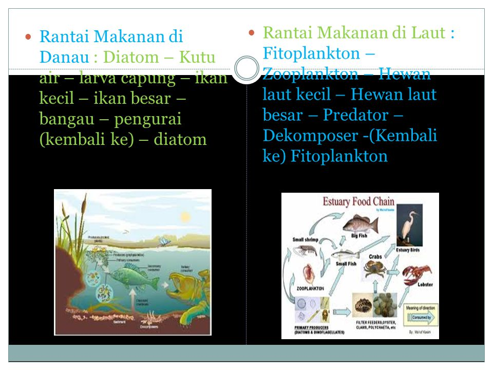 Kebiasaan Cara Makan Ikan (Feeding Habits) Kebiasaan cara makan adalah kapan waktu, tempat dan cara ikan mendapatkan makanannya.