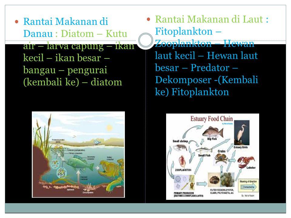 Rantai Makanan di Danau : Diatom – Kutu air – larva capung – ikan kecil – ikan besar – bangau – pengurai (kembali ke) – diatom Rantai Makanan di Laut