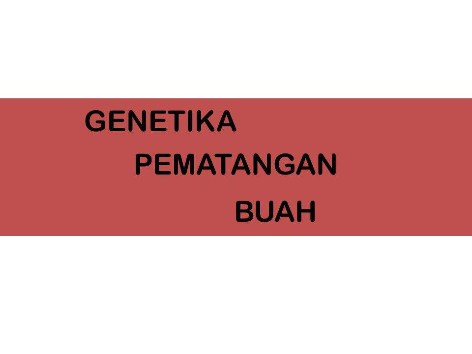 PEMATANGAN GENETIKA BUAH