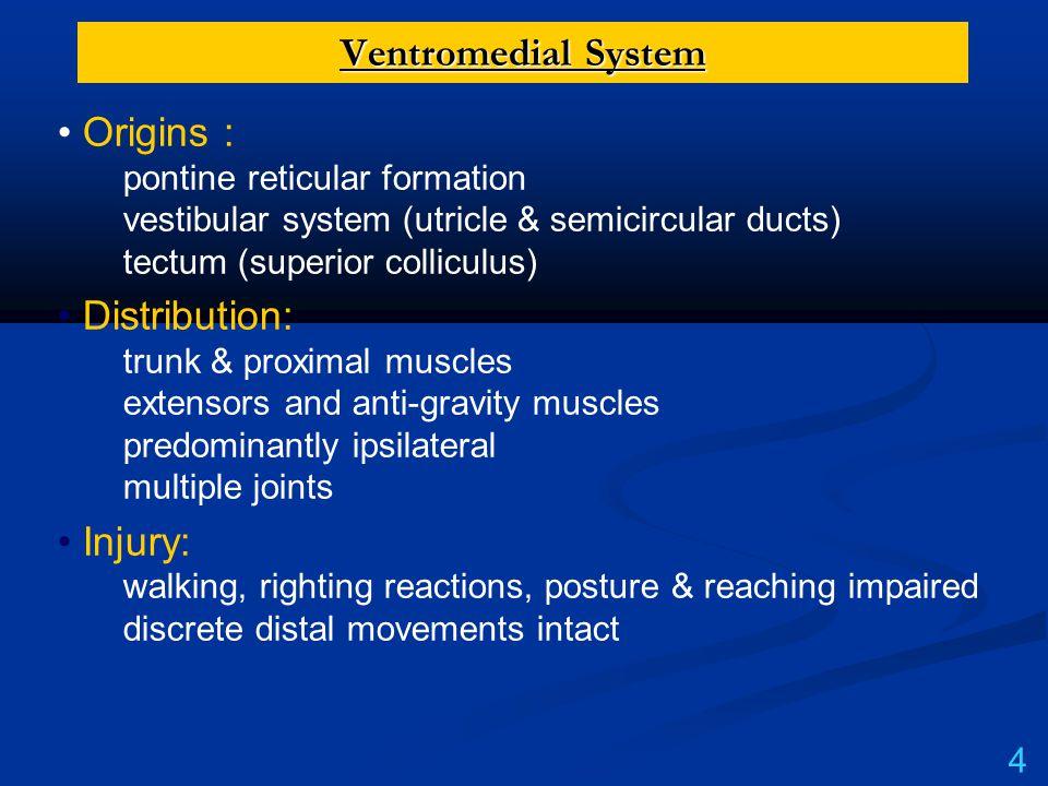 Ventromedial System Origins : pontine reticular formation vestibular system (utricle & semicircular ducts) tectum (superior colliculus) Distribution: