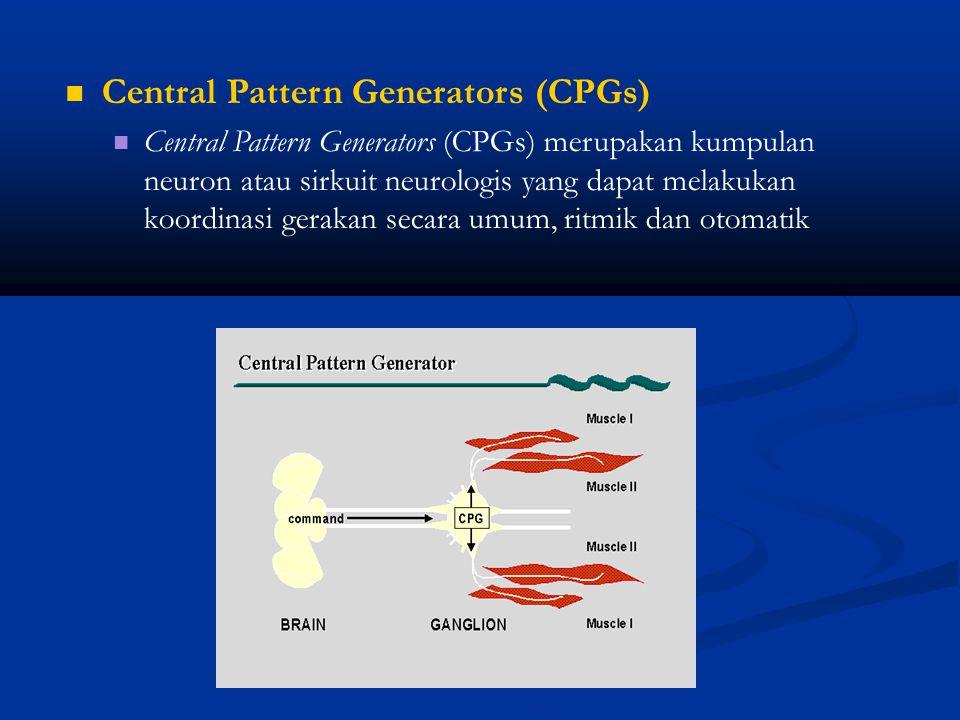 Central Pattern Generators (CPGs) Central Pattern Generators (CPGs) merupakan kumpulan neuron atau sirkuit neurologis yang dapat melakukan koordinasi