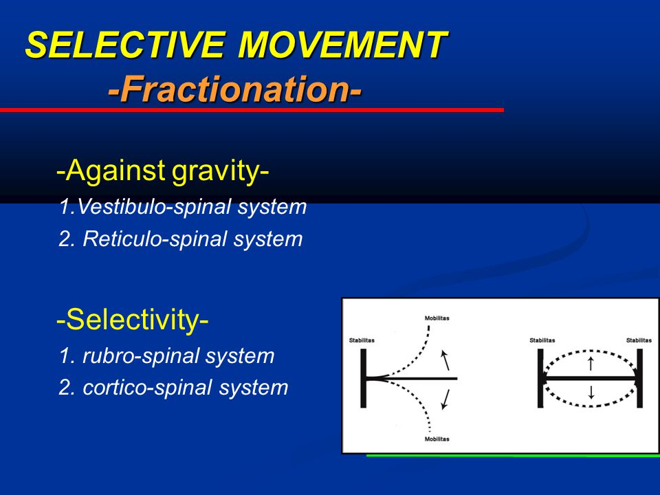 SELECTIVE MOVEMENT -Fractionation- -Against gravity- 1.Vestibulo-spinal system 2. Reticulo-spinal system -Selectivity- 1. rubro-spinal system 2. corti