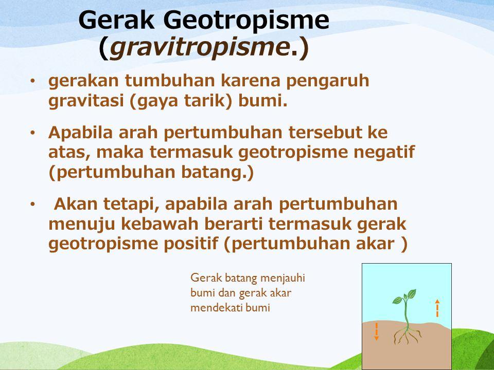 Gerak Geotropisme (gravitropisme.) gerakan tumbuhan karena pengaruh gravitasi (gaya tarik) bumi. Apabila arah pertumbuhan tersebut ke atas, maka terma