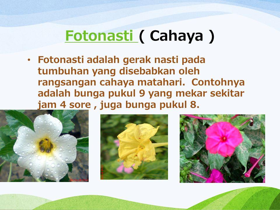 Fotonasti Fotonasti ( Cahaya ) Fotonasti adalah gerak nasti pada tumbuhan yang disebabkan oleh rangsangan cahaya matahari. Contohnya adalah bunga puku
