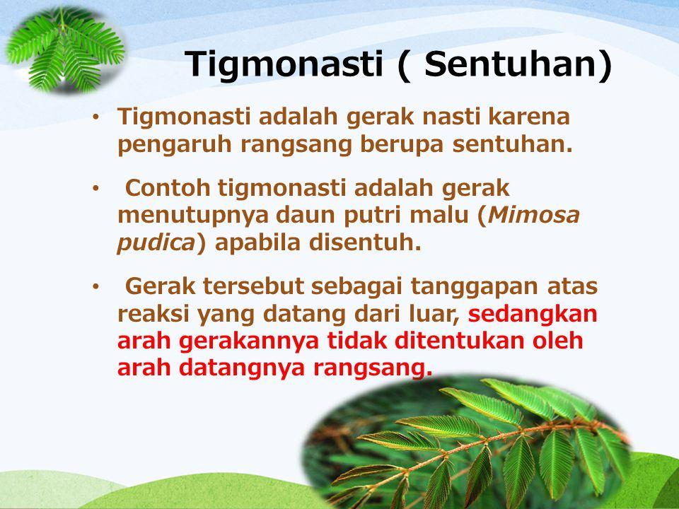 Tigmonasti ( Sentuhan) Tigmonasti adalah gerak nasti karena pengaruh rangsang berupa sentuhan. Contoh tigmonasti adalah gerak menutupnya daun putri ma