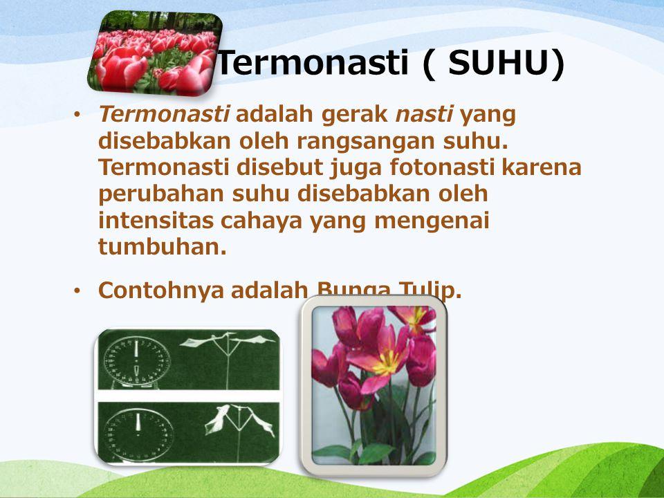 Termonasti ( SUHU) Termonasti adalah gerak nasti yang disebabkan oleh rangsangan suhu. Termonasti disebut juga fotonasti karena perubahan suhu disebab