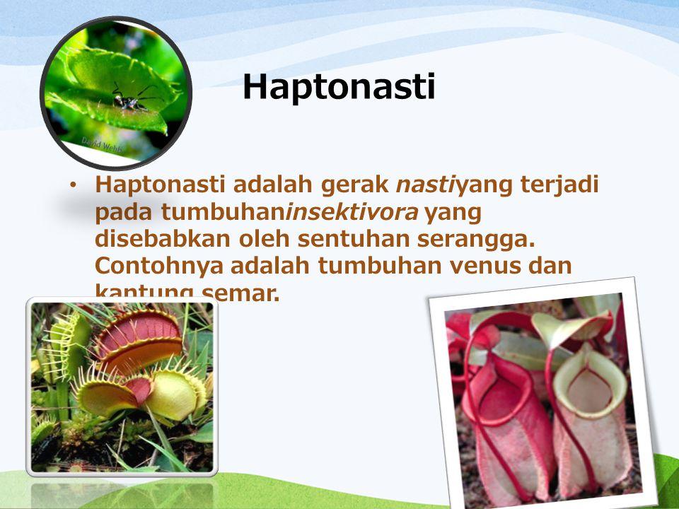 Haptonasti Haptonasti adalah gerak nastiyang terjadi pada tumbuhaninsektivora yang disebabkan oleh sentuhan serangga. Contohnya adalah tumbuhan venus