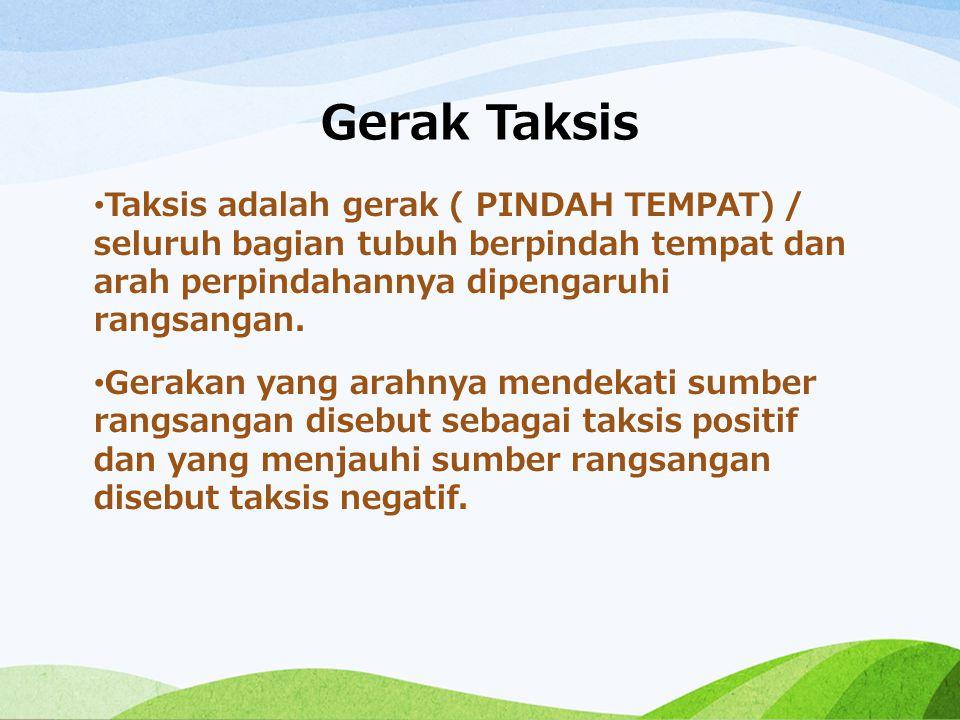 Gerak Taksis Taksis adalah gerak ( PINDAH TEMPAT) / seluruh bagian tubuh berpindah tempat dan arah perpindahannya dipengaruhi rangsangan. Gerakan yang