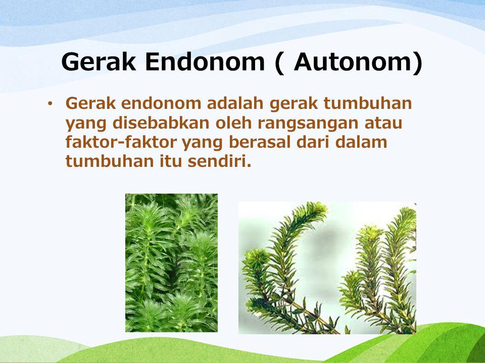 Gerak Endonom ( Autonom) Gerak endonom adalah gerak tumbuhan yang disebabkan oleh rangsangan atau faktor-faktor yang berasal dari dalam tumbuhan itu s