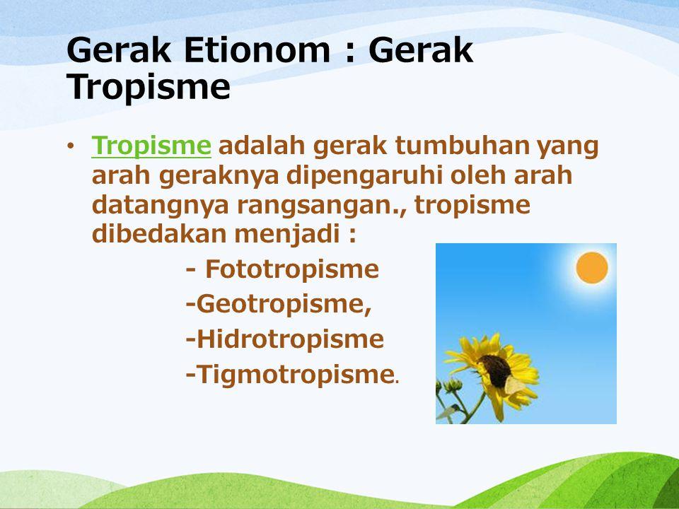 Gerak Etionom : Gerak Tropisme Tropisme adalah gerak tumbuhan yang arah geraknya dipengaruhi oleh arah datangnya rangsangan., tropisme dibedakan menja