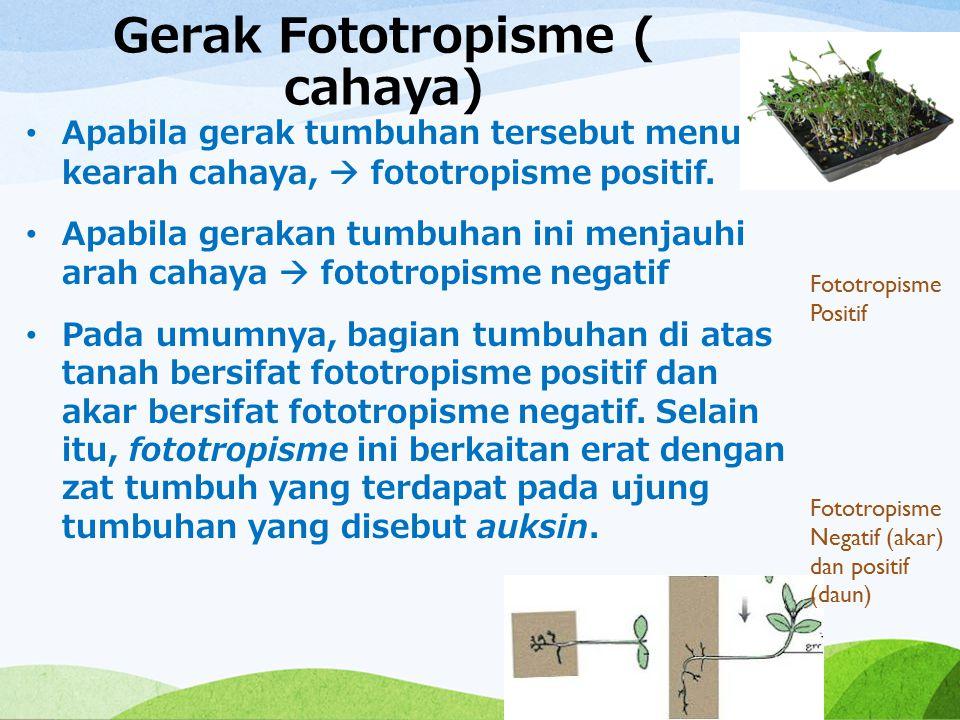 Gerak Fototropisme ( cahaya) Apabila gerak tumbuhan tersebut menuju kearah cahaya,  fototropisme positif. Apabila gerakan tumbuhan ini menjauhi arah