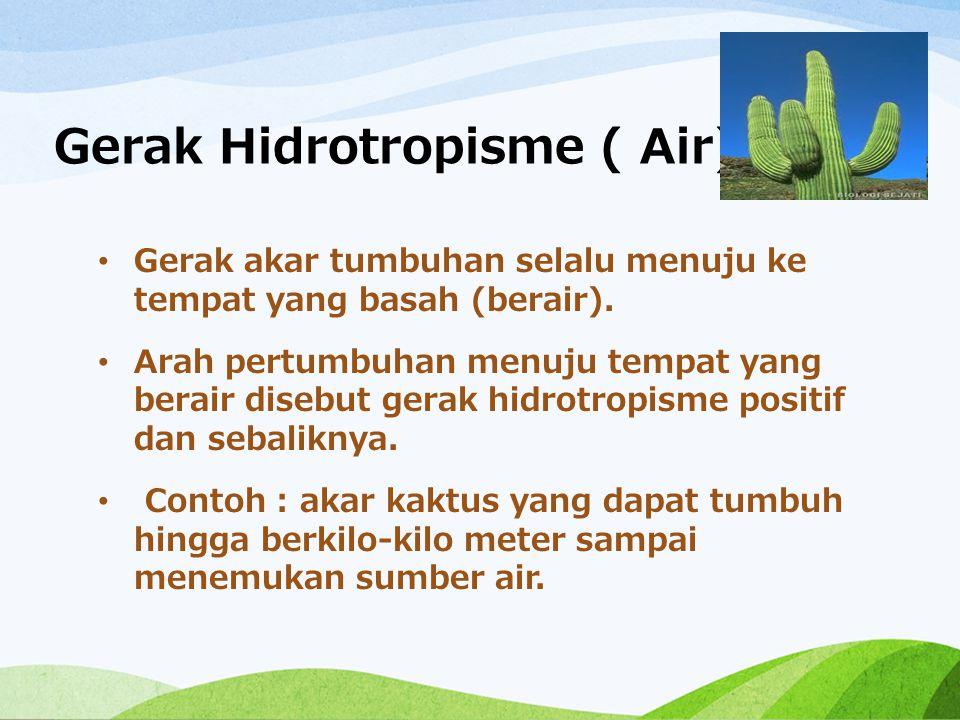 Gerak Hidrotropisme ( Air) Gerak akar tumbuhan selalu menuju ke tempat yang basah (berair). Arah pertumbuhan menuju tempat yang berair disebut gerak h