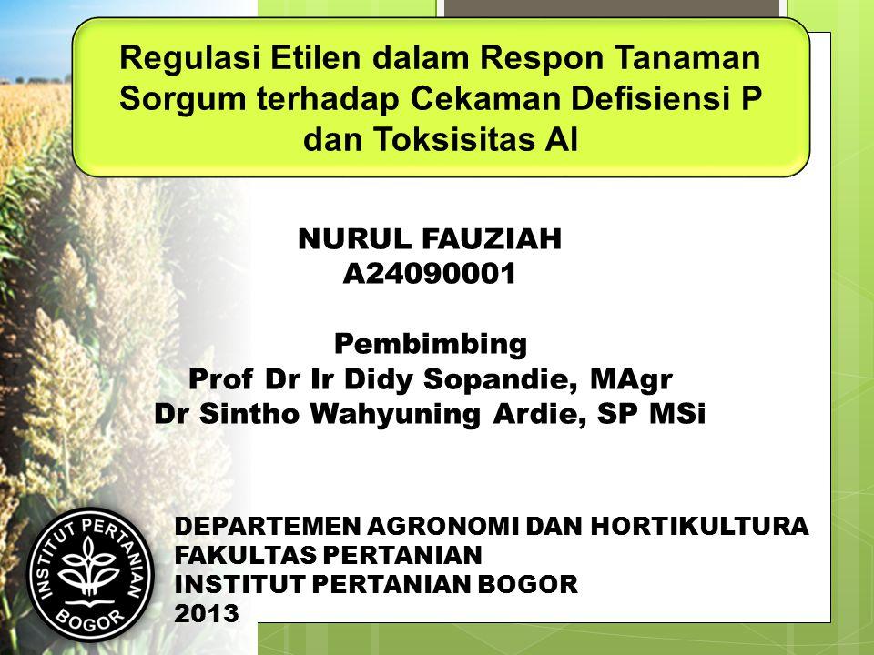 Regulasi Etilen dalam Respon Tanaman Sorgum terhadap Cekaman Defisiensi P dan Toksisitas Al NURUL FAUZIAH A24090001 Pembimbing Prof Dr Ir Didy Sopandi