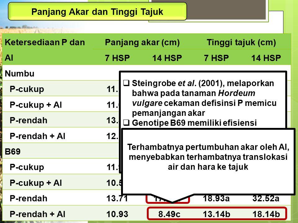 Ketersediaan P dan Al Panjang akar (cm)Tinggi tajuk (cm) 7 HSP14 HSP7 HSP14 HSP Numbu P-cukup11.1913.9720.5643.67 P-cukup + Al11.6415.3321.3142.97 P-r