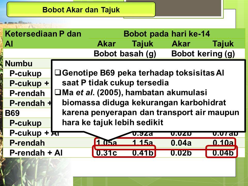 Ketersediaan P dan Al Bobot pada hari ke-14 AkarTajukAkarTajuk Bobot basah (g)Bobot kering (g) Numbu P-cukup1.052.010.030.17 P-cukup + Al0.891.810.030