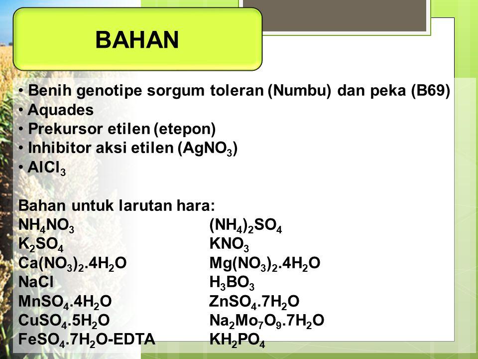 BAHAN Benih genotipe sorgum toleran (Numbu) dan peka (B69) Aquades Prekursor etilen (etepon) Inhibitor aksi etilen (AgNO 3 ) AlCl 3 Bahan untuk laruta