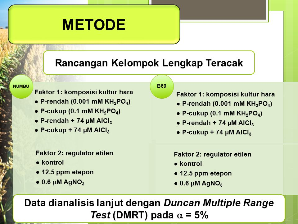 METODE Faktor 1: komposisi kultur hara ● P-rendah (0.001 mM KH2PO4) ● P-cukup (0.1 mM KH 2 PO 4 ) ● P-rendah + 74 µM AlCl 3 ● P-cukup + 74 µM AlCl 3 F
