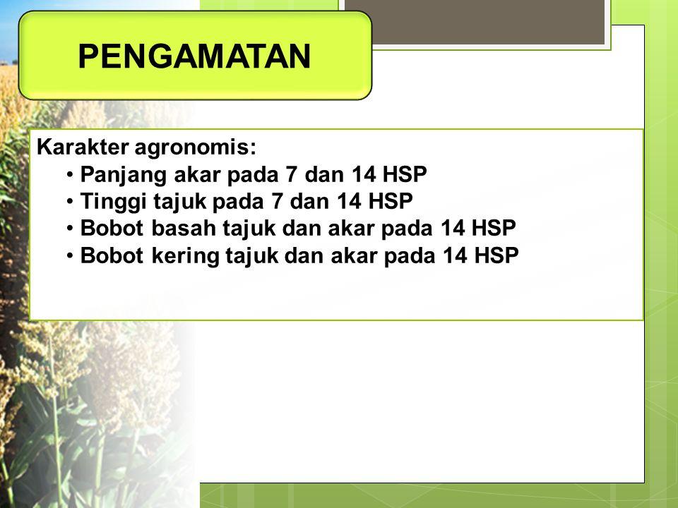 PENGAMATAN Karakter agronomis: Panjang akar pada 7 dan 14 HSP Tinggi tajuk pada 7 dan 14 HSP Bobot basah tajuk dan akar pada 14 HSP Bobot kering tajuk