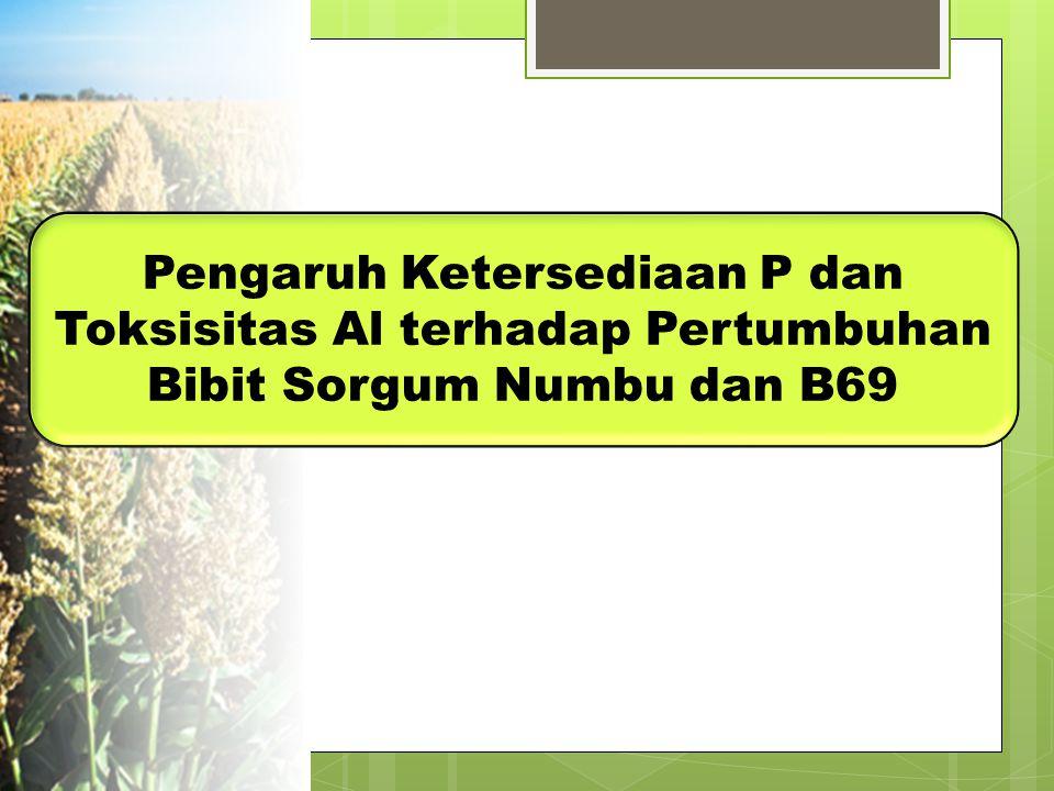 Pengaruh Ketersediaan P dan Toksisitas Al terhadap Pertumbuhan Bibit Sorgum Numbu dan B69