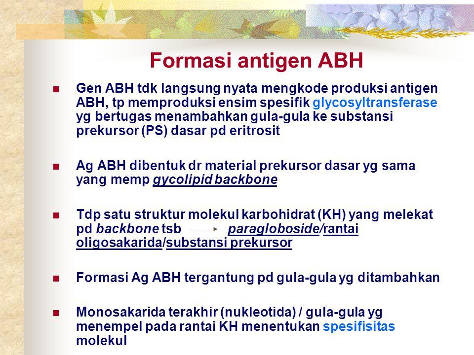 Formasi antigen ABH Gen ABH tdk langsung nyata mengkode produksi antigen ABH, tp memproduksi ensim spesifik glycosyltransferase yg bertugas menambahka