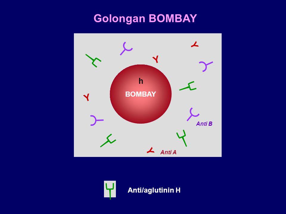 Golongan BOMBAY BOMBAY h Anti/aglutinin H Y Y Anti B Anti A Y Y