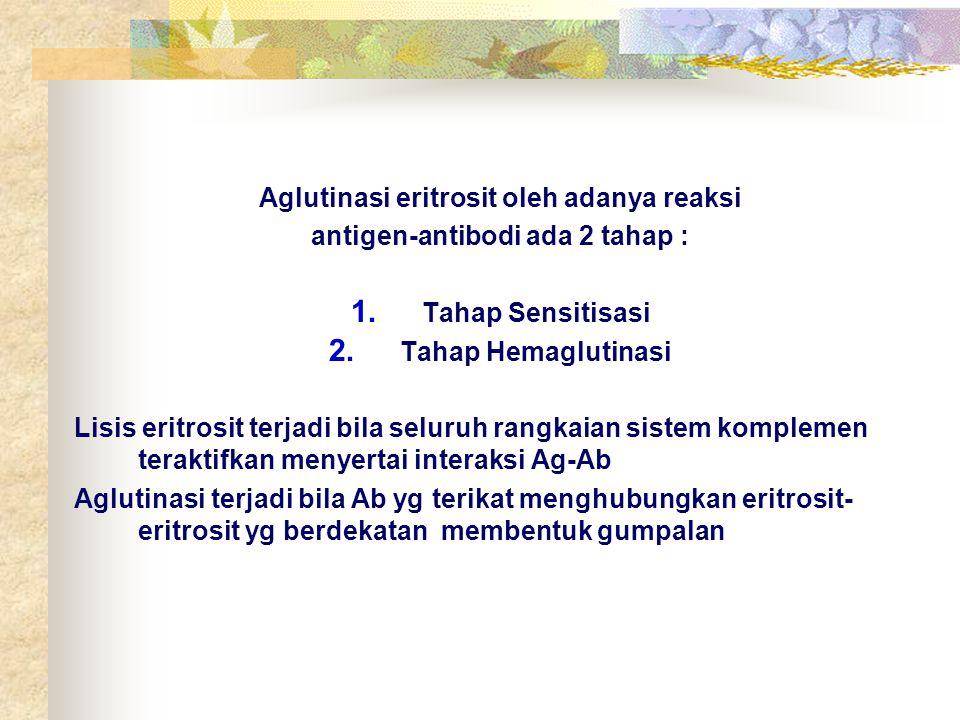 Aglutinasi eritrosit oleh adanya reaksi antigen-antibodi ada 2 tahap : 1. Tahap Sensitisasi 2. Tahap Hemaglutinasi Lisis eritrosit terjadi bila seluru