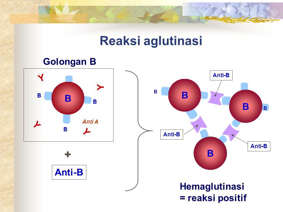Reaksi aglutinasi B B B B Anti A B Hemaglutinasi = reaksi positif B B Anti-B + B B Golongan B Y Y Y Y