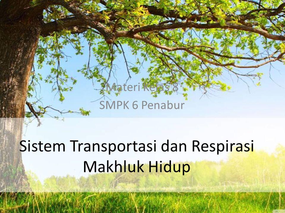 Sistem Transportasi dan Respirasi Makhluk Hidup Materi Kelas 8 SMPK 6 Penabur