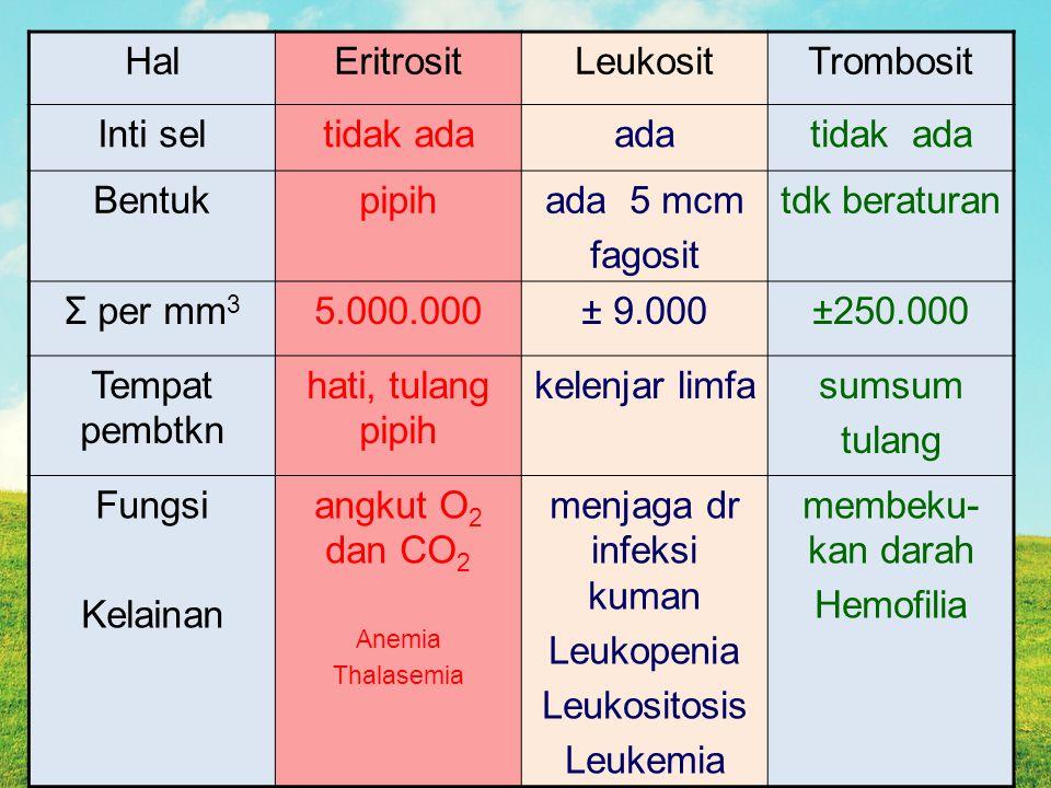 HalEritrositLeukositTrombosit Inti seltidak adaadatidak ada Bentukpipihada 5 mcm fagosit tdk beraturan Σ per mm 3 5.000.000± 9.000±250.000 Tempat pembtkn hati, tulang pipih kelenjar limfasumsum tulang Fungsi Kelainan angkut O 2 dan CO 2 Anemia Thalasemia menjaga dr infeksi kuman Leukopenia Leukositosis Leukemia membeku- kan darah Hemofilia