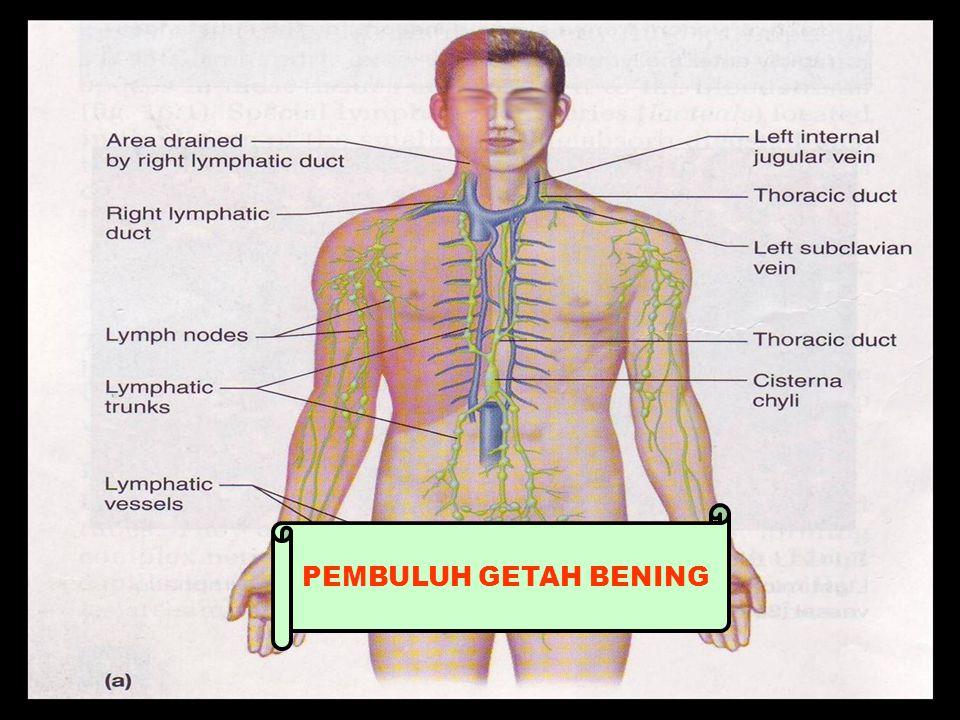 PEMBULUH GETAH BENING