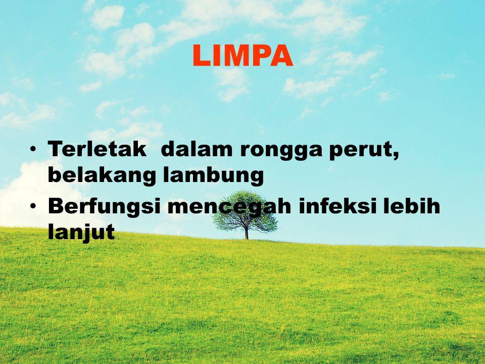 LIMPA Terletak dalam rongga perut, belakang lambung Berfungsi mencegah infeksi lebih lanjut