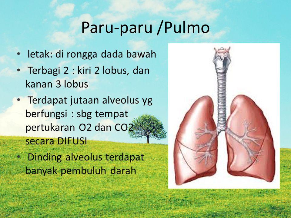 Paru-paru /Pulmo letak: di rongga dada bawah Terbagi 2 : kiri 2 lobus, dan kanan 3 lobus Terdapat jutaan alveolus yg berfungsi : sbg tempat pertukaran O2 dan CO2 secara DIFUSI Dinding alveolus terdapat banyak pembuluh darah