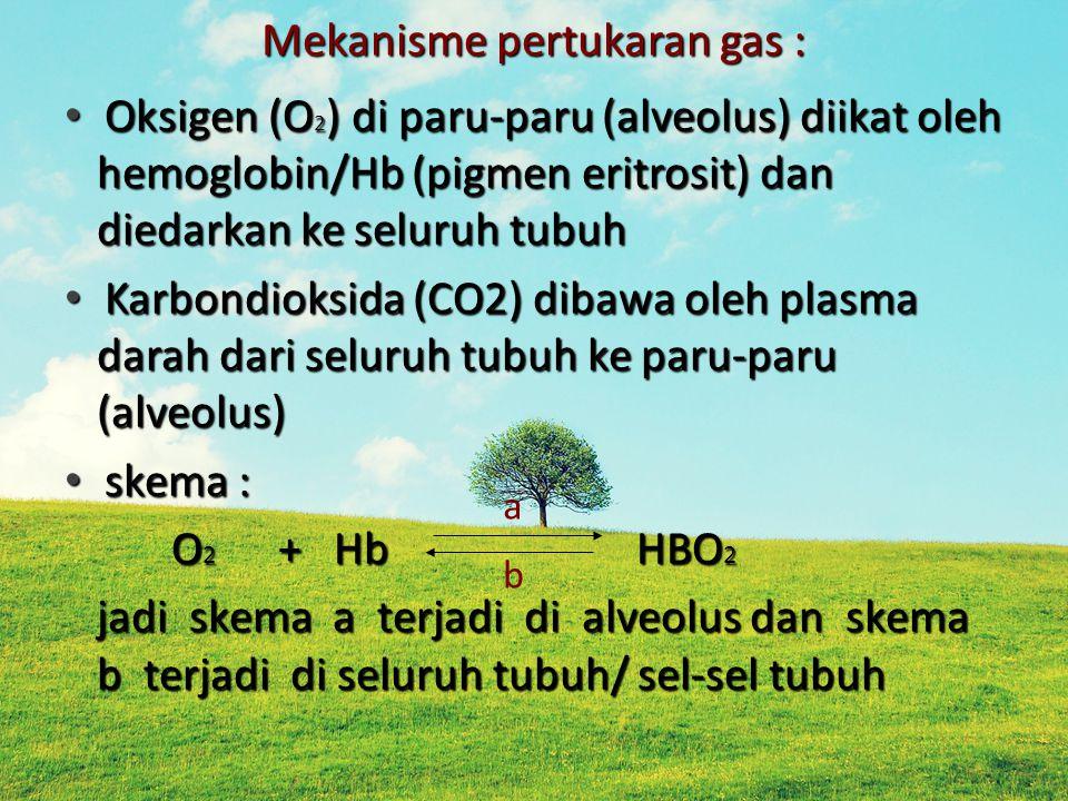 Mekanisme pertukaran gas : Oksigen (O 2 ) di paru-paru (alveolus) diikat oleh hemoglobin/Hb (pigmen eritrosit) dan diedarkan ke seluruh tubuh Oksigen (O 2 ) di paru-paru (alveolus) diikat oleh hemoglobin/Hb (pigmen eritrosit) dan diedarkan ke seluruh tubuh Karbondioksida (CO2) dibawa oleh plasma darah dari seluruh tubuh ke paru-paru (alveolus) Karbondioksida (CO2) dibawa oleh plasma darah dari seluruh tubuh ke paru-paru (alveolus) skema : skema : O 2 + Hb HBO 2 jadi skema a terjadi di alveolus dan skema b terjadi di seluruh tubuh/ sel-sel tubuh a b