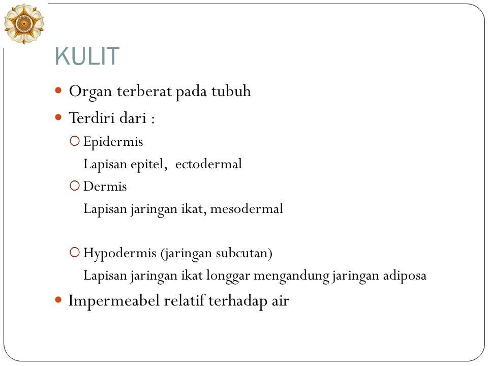 KULIT Organ terberat pada tubuh Terdiri dari :  Epidermis Lapisan epitel, ectodermal  Dermis Lapisan jaringan ikat, mesodermal  Hypodermis (jaringan subcutan) Lapisan jaringan ikat longgar mengandung jaringan adiposa Impermeabel relatif terhadap air
