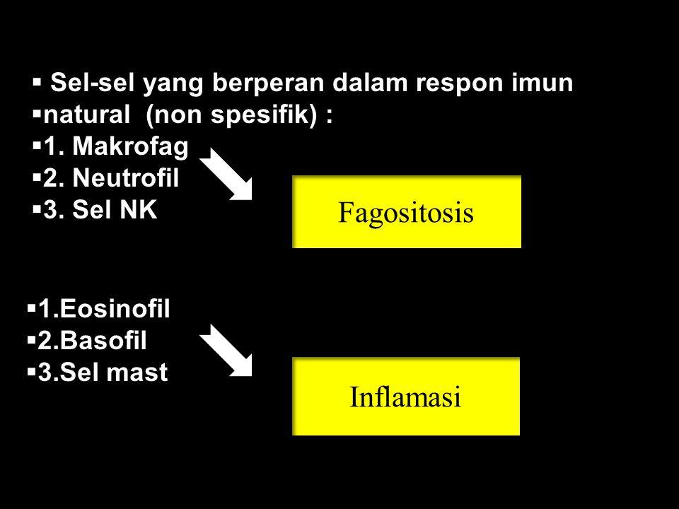  Sel-sel yang berperan dalam respon imun  natural (non spesifik) :  1.