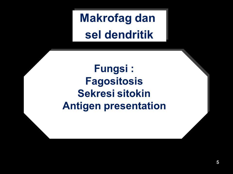 5 Fungsi : Fagositosis Sekresi sitokin Antigen presentation Fungsi : Fagositosis Sekresi sitokin Antigen presentation Makrofag dan sel dendritik Makrofag dan sel dendritik