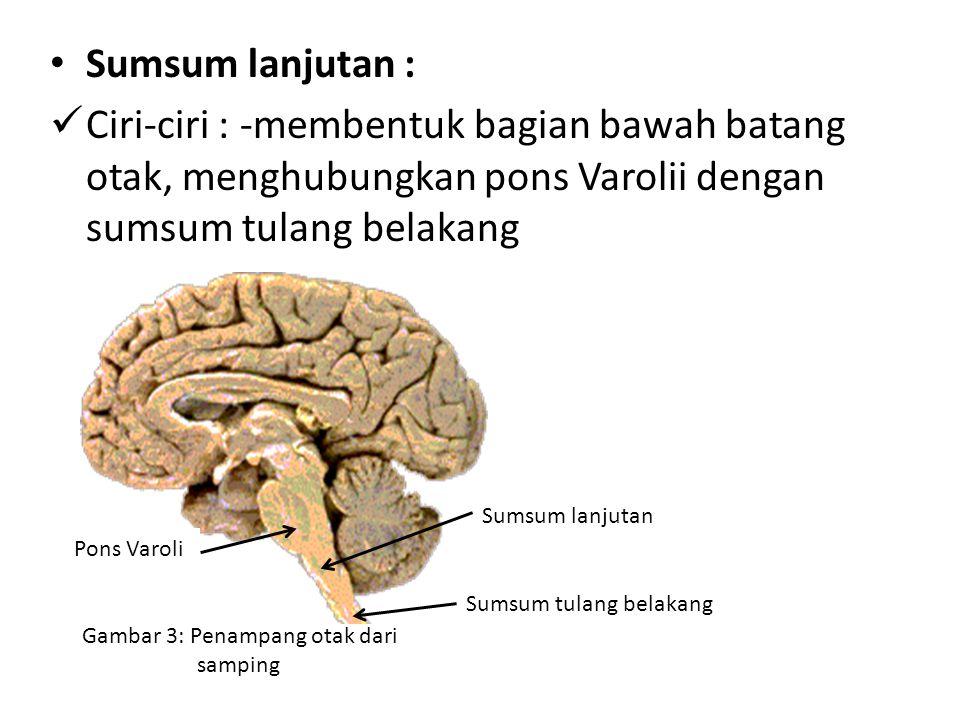 Sumsum lanjutan : Ciri-ciri : -membentuk bagian bawah batang otak, menghubungkan pons Varolii dengan sumsum tulang belakang Gambar 3: Penampang otak dari samping Sumsum lanjutan Pons Varoli Sumsum tulang belakang