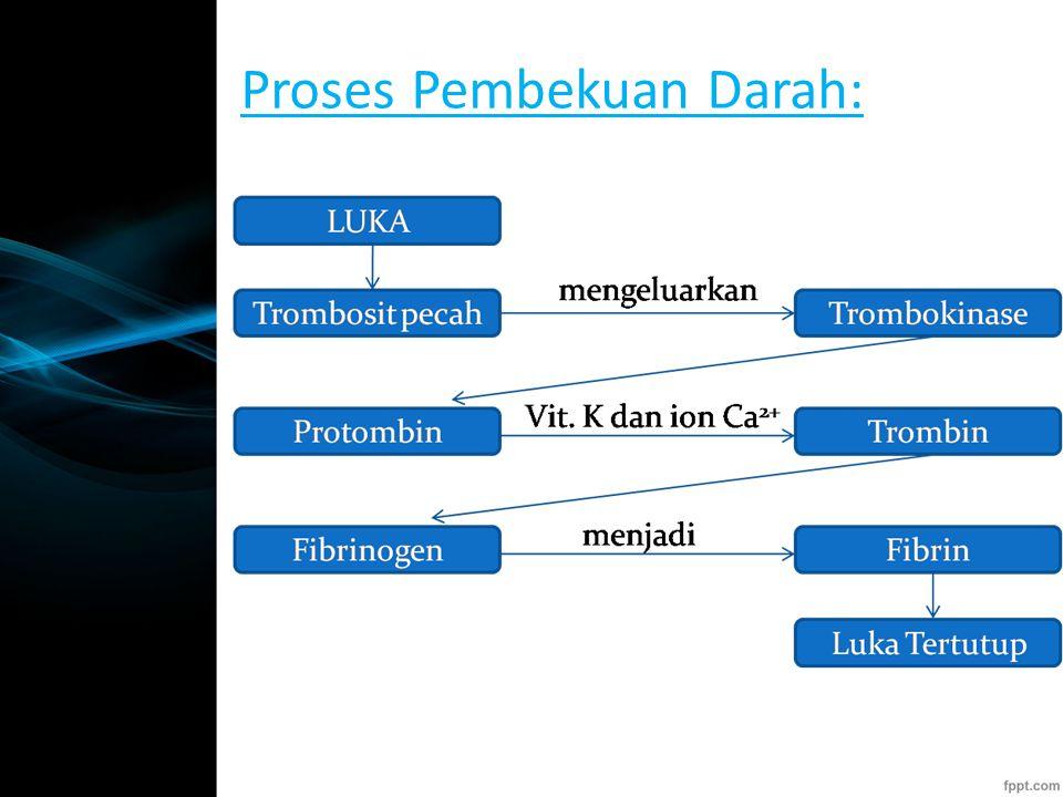 Proses Pembekuan Darah: