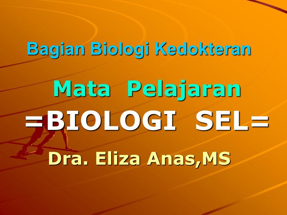 Retikulum Endoplasma Berbentuk Sisternae (kantong pipih) Berhubungan dengan membran nukleus Ada 2 macam : 1.