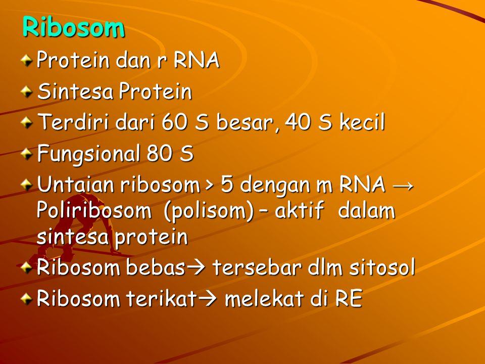 Eukariota -Mempunyai membran nukleus -Organel sel lengkap  Ribosom  Nukleus  Retikulum endoplasma  Kompleks golgi  Lisosom  Peroksisom  Mitokho